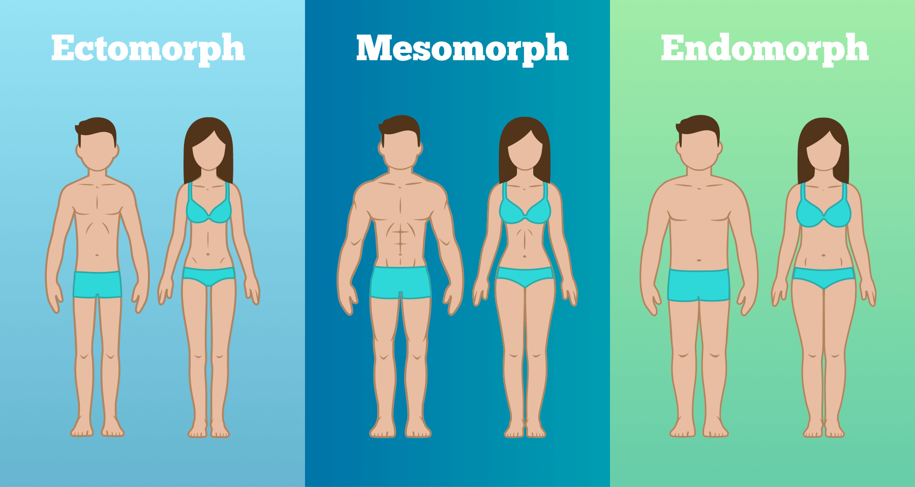 Body shapes_ecto_meso_endo